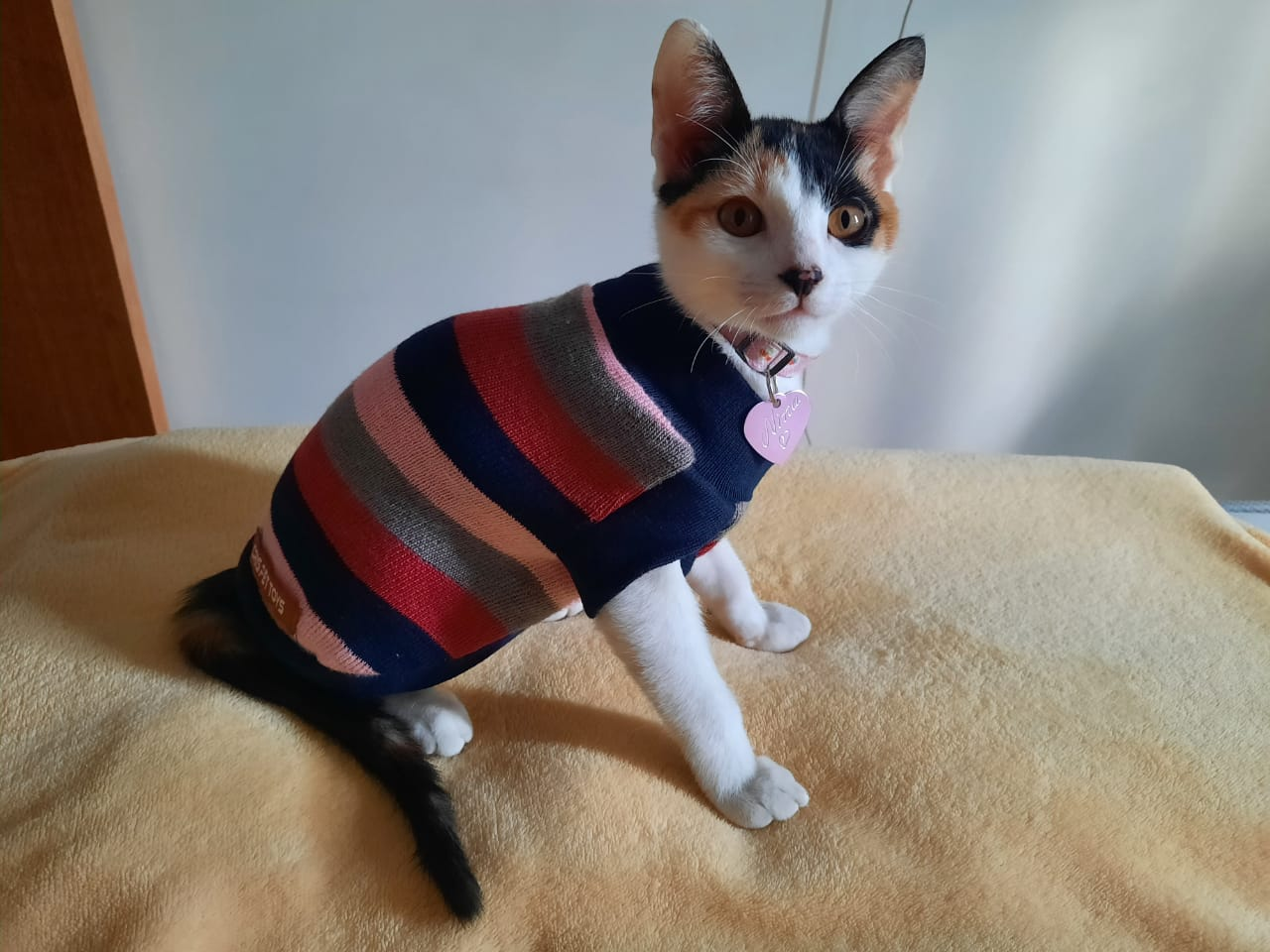 Foto mostra gatinho com roupa listrada vermelha e preta